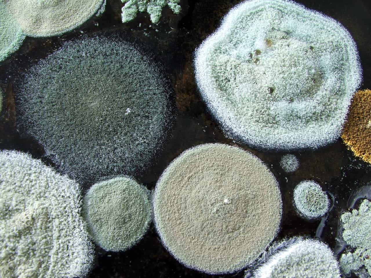 Does an Air Quality Test Detect Mold?