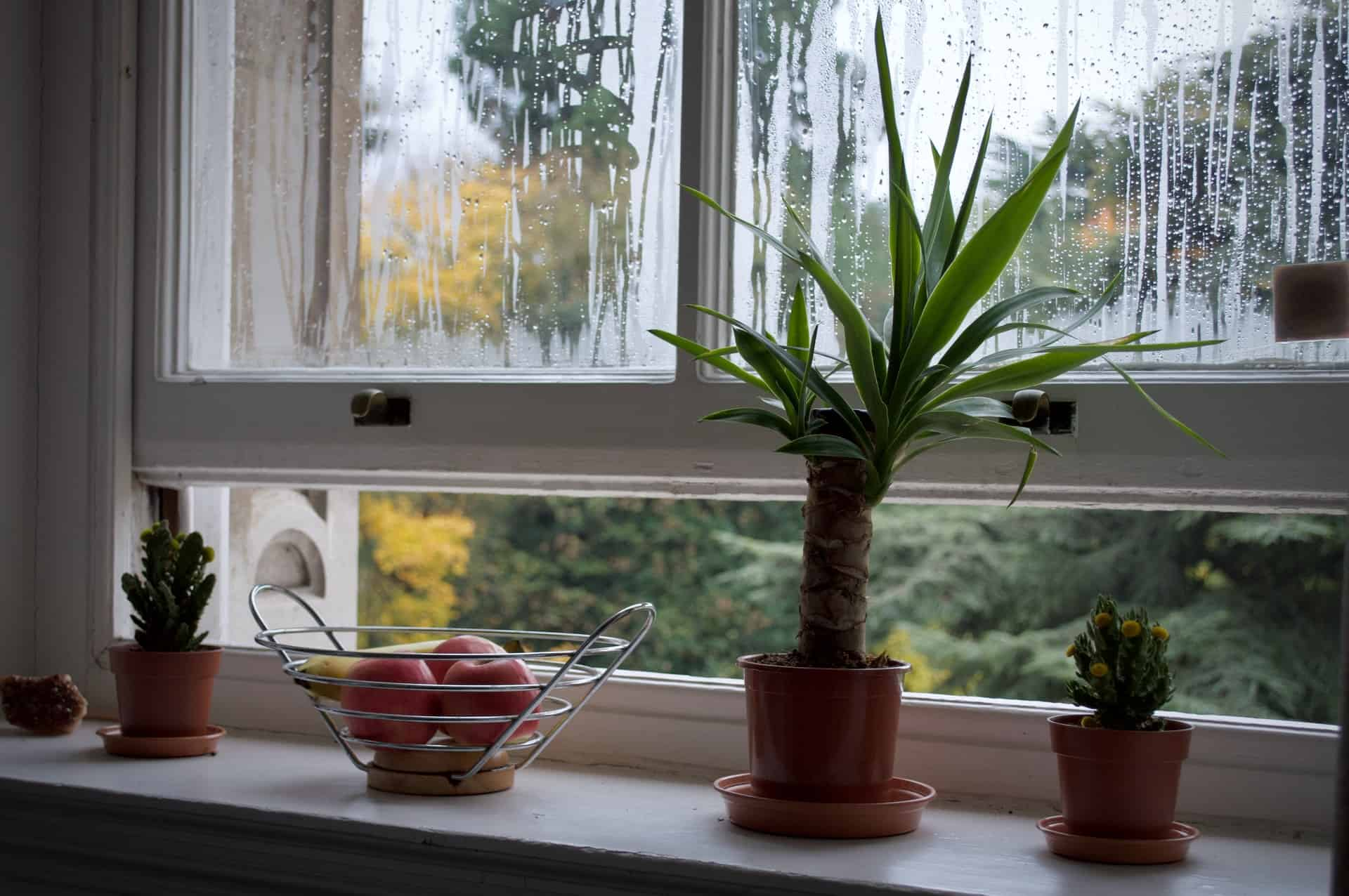Is it Good to Leave Your Windows Open?